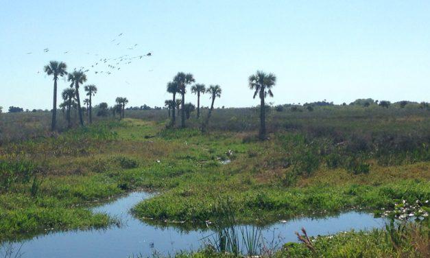 Southern Florida backroads road trip