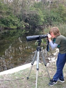 Photographing wildlife in Big Cypress National Preserve