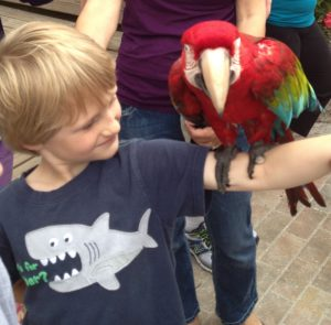 Periwinkle Park macaw encounter