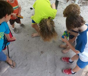 Kids find a hermit crab while camping at the beach