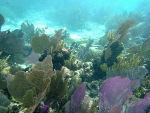 Corals of the reef in Key Largo