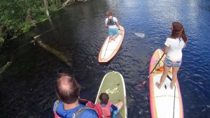 Family paddleboarding on Silver River