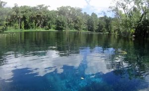 Several freshwater springs feed the Silver River in Ocala
