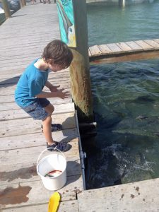 Kids love feeding the tarpon at Robbie's