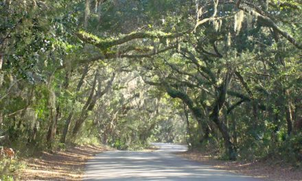 Scenic drives in Florida perfect for family adventure