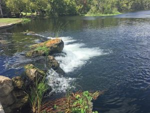 DeLeon Springs State Park offers swimming and snorkeling in the spring, and a boat tour down the spring run.