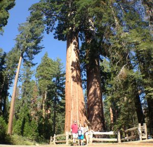 We drove across the country to see these huge sequoias! Our family got in for free with the Every Kid in a Park pass.