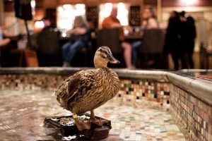 The Peabody hotel ducks are a hit with kids