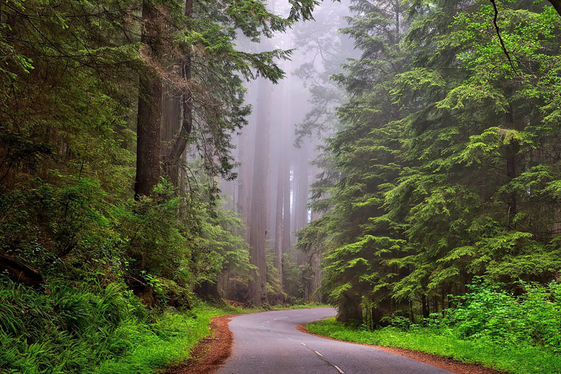 Drive through northern California's redwood forests on a family road trip