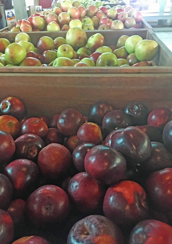 Pick a variety of apples at apple orchards
